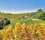 Weine aus Österreich